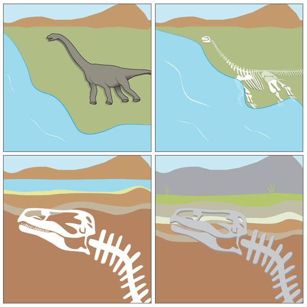 How is a dinosaur fossil made?